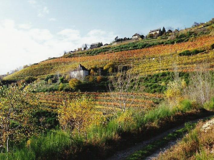 Vineyard le Fel